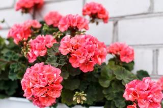 Москвичам предлагают размещать сады на крышах домов для улучшения экологической обстановки города