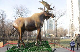 """Парк """"Торфянка"""". Фото: официальный сайт Мэра Москвы"""