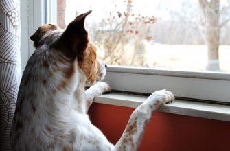 собака подоконник самоизоляция