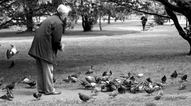 дедушка голуби птицы