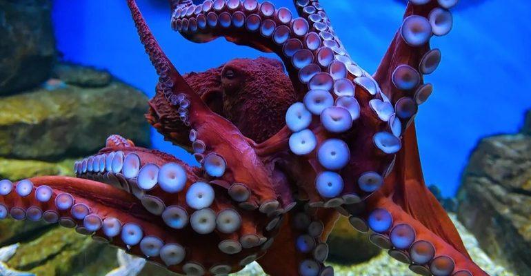 москвариум осьминог море океан