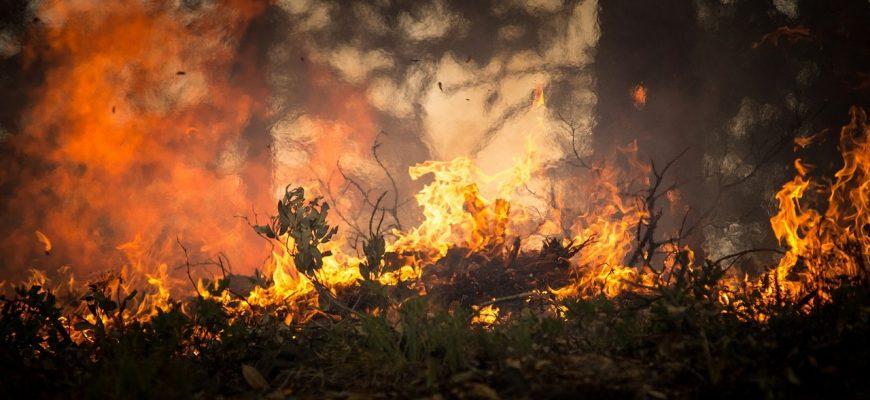 Лесной пожар. Фото: pixabay