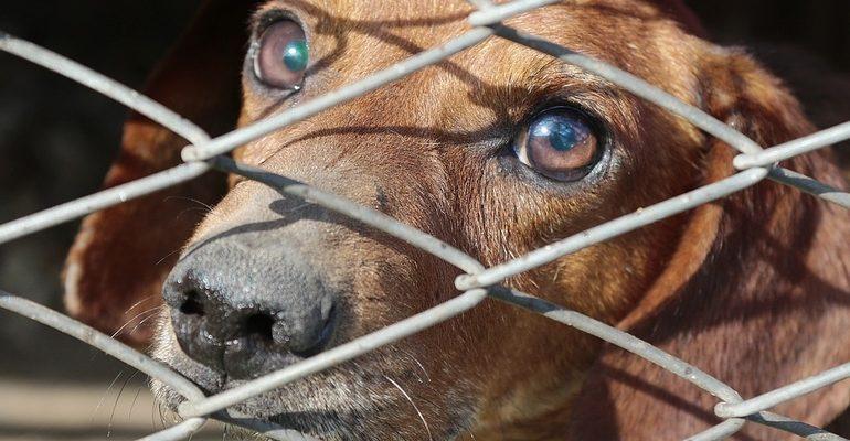 клетка собака пес