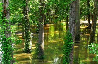 потоп затопление лес