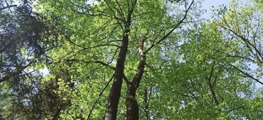 Липкинский лес. Фото: со страницы группы Мортонграду.нет на Facebook