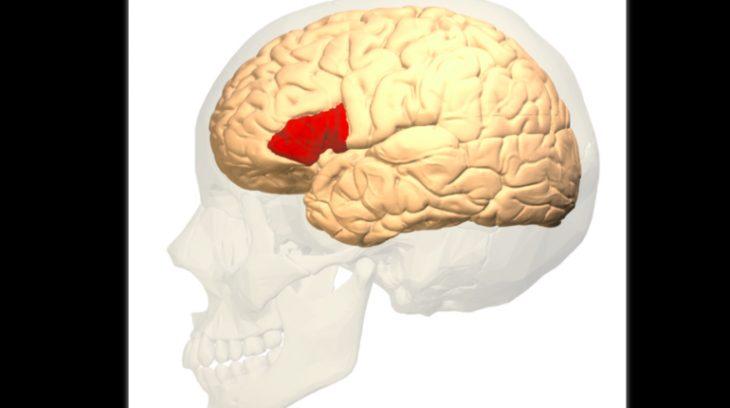 Центр Брока череп
