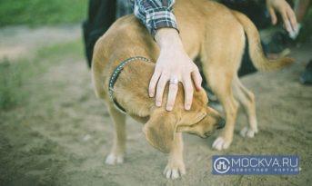 Ветеринары обнаружили у собак признаки человеческого психического расстройства