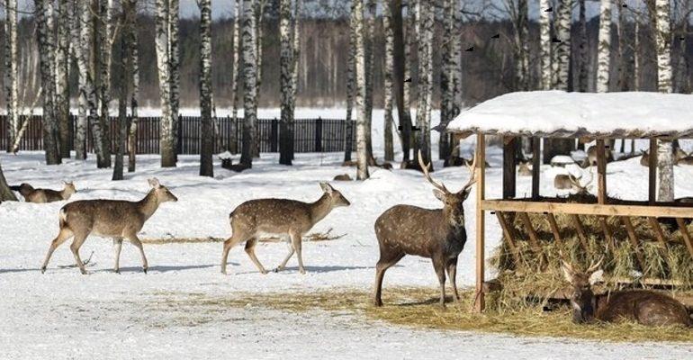 лось олени парк заповедник