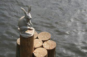 петербург заяц