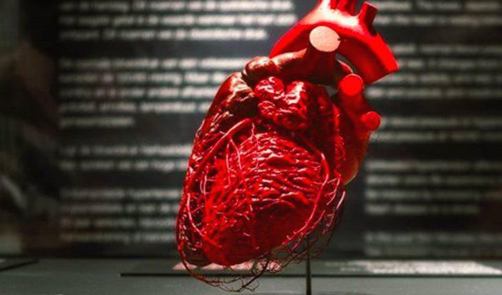 мир тела сердце организм биология анатомия