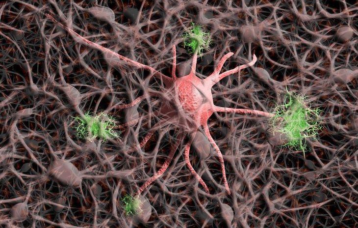 Нервная система нейроны нервы