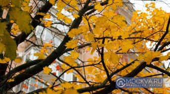 Солнечный день 7 октября в Москве завершит ночное похолодание
